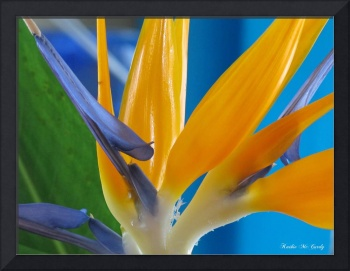 Bird of Paradise Flower Abstract