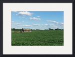 Soybeans and Shed by Rich Kaminsky