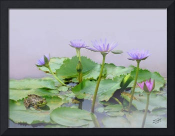 Water Lilies and Frog in Ha Giang