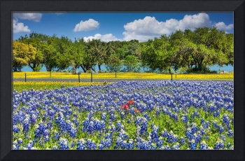 Colorful Wildflower Landscape