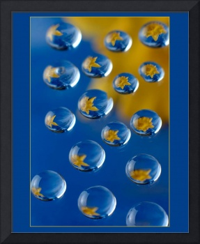Droplets with dafodil reflection