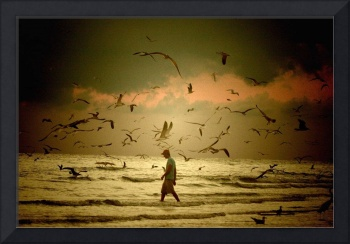 Siesta key, walking with the birds