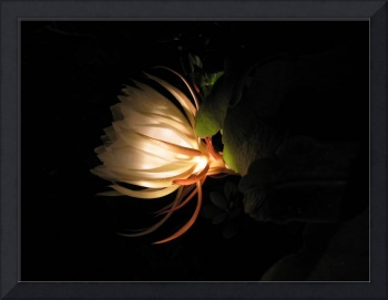 Flower of the night 03