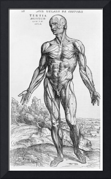Anatomical Study, illustration