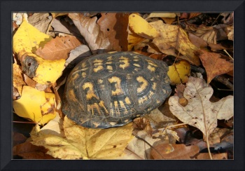 Turtle and autumn leaves