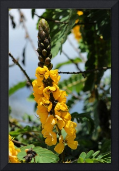 Yellow Flowers and Buds on a Tree