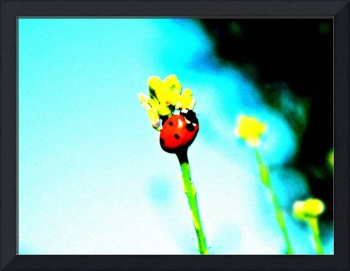 A Ladybugs Journey