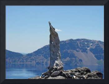 Crater Lake Lightning Tree Oregon Blue Lake Art