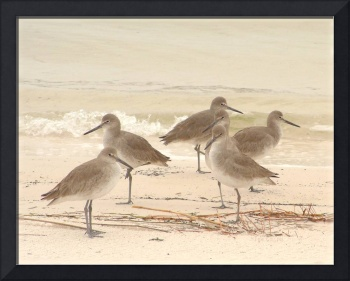 Six Sandpipers