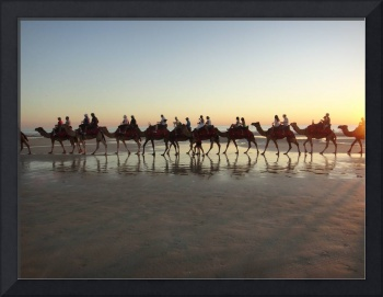 Camel Safari in Broome