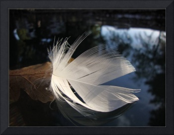 Floating Feather3