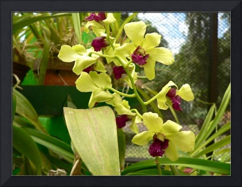 yellow and red orchid