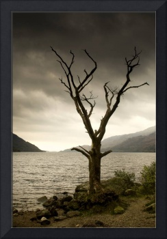 Dying Tree On Shoreline, Loch Lomand, Scotland
