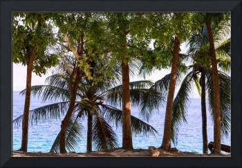 Coconut Trees Ocean Scenic View