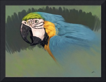 Parrots - Blue and Gold Macaw