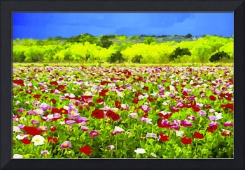 Poppies Under The Texas Sky