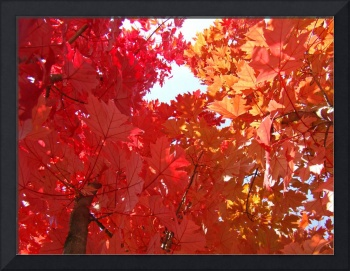 FALL TREES Autumn Art Red Orange Leaves Landscape
