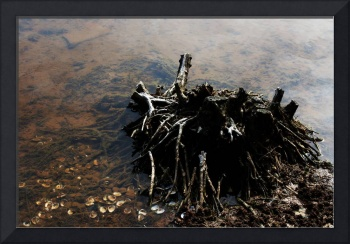 Lake Tree Stump