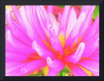 Fiery Hot Pink and Yellow Cactus Dahlia