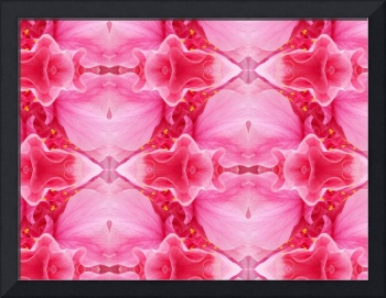Double Pink Hibicus Abstract