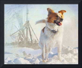 molly the dog with shackleton and the endurance