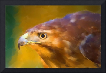 Red Tailed Hawk Digital Watercolor