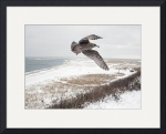 Seagull at Chatham Light Bluff by Christopher Seufert