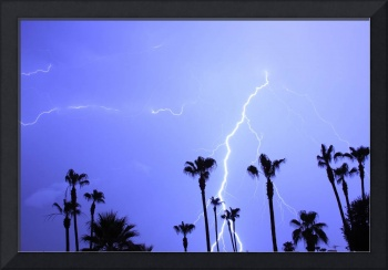 13 Palms Trees Lightning Strike