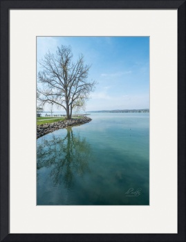 Tree by Lake Canandaigua by D. Brent Walton