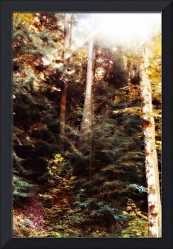 Forest and Light