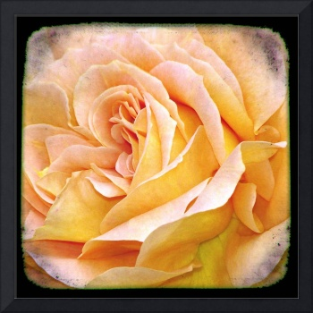 Through the Viewfinder photography -Flower I