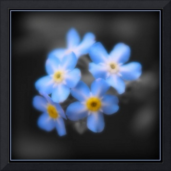 Forget Me Not - 22nd May 2008