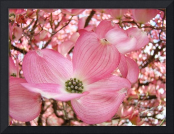 DOGWOOD Flowers Pink Dogwood Tree 1 Giclee Art