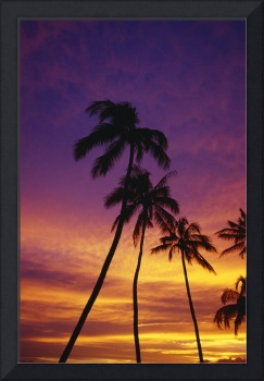 Palm Tree Silhouettes, Sunset, Waikiki Beach, Hawa