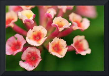 Pink Little Flowers