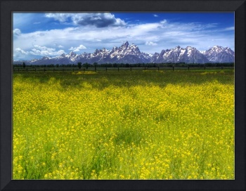 Spring Around The Tetons