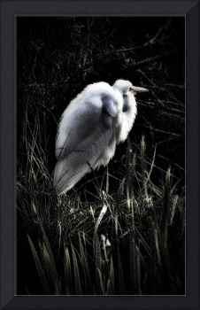 Egret Facing The Day