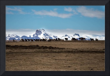 Icelandic Horses and Mountains