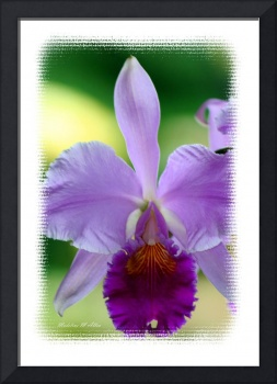 Orchid #4