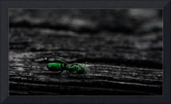 Ant On Board - Green