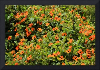 Orange Wildflowers on a Bush