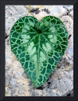 Nature's Heart