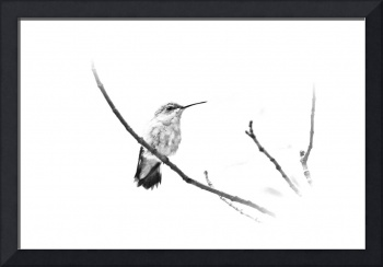 B&W Ruby Throated Hummingbird