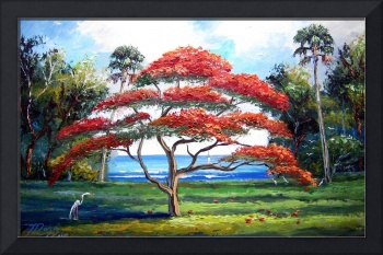 Red Royal Poinciana Tree