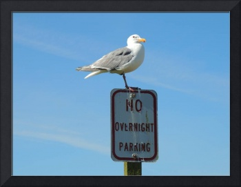 No Overnight Parking - Pacific Coast