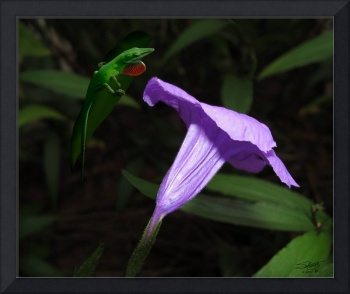 Florida Bluebell and Green Lizard