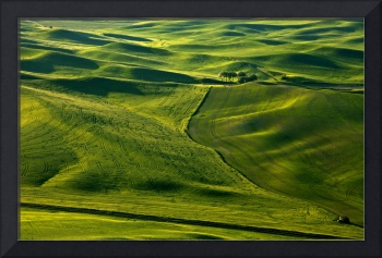 Palouse Patterns