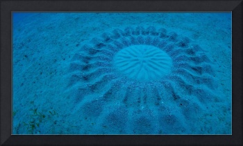 Sand Patterns Made By Pufferfish