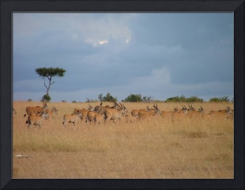 Gazelles on the Run