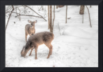 Spike and Young Doe Whitetail Deer